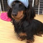 daschund-puppy-testimonial